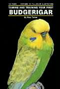 Taming/Training Budgerigars