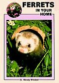 Ferrets In Your Home