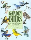 Garden Birds How To Attracts Birds To