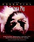 Essential Guinea Pig