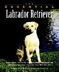 Essential Labrador Retriever