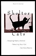 Shelter Cats Adopting From A Shelter