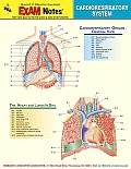 Cardiorespiratory System Anatomy Exam Notes