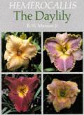 Hermerocallis the Daylily