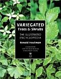 Variegated Trees & Shrubs The Illustrated Encyclopedia