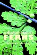 Natural History Of Ferns