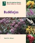 Buddlejas (Royal Horticultural Society Plant Collector Guide)