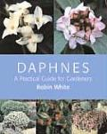 Daphnes A Practical Guide For Gardeners