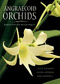 Angraecoid Orchids Species from the African Region