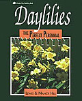 Daylilies The Perfect Perennial