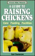 Guide To Raising Chickens Care Feeding Facilit