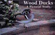 Wood Ducks: A Pictorial Study