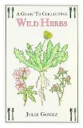 Guide To Collecting Wild Herbs