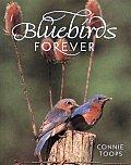 Bluebirds Forever