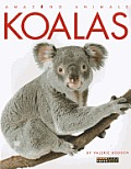 Amazing Animals Koalas