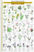 Yellowstone & Grand Teton National Parks: Trees & Wildflowers (Mac's Guides)