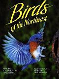 Birds of the Northeast: Washington, D.C. Through New England