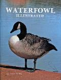Waterfowl Illustrated