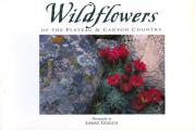 Wildflowers of the Plateau & Canyon Country: Twenty Postcards