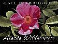 Gail Niebrugge's Alaska Wildflowers