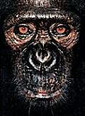 James Mollison: James & Other Apes