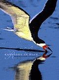 Rhapsody in Blue a Celebration of North American Waterbirds