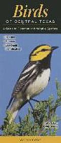 Birds of Central Texas: A Guide to Common & Notable Species