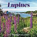 2016 Maine Lupine Down East Wall Calendar