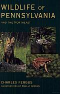 Wildlife of Pennsylvania and the Northeast