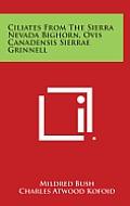 Ciliates from the Sierra Nevada Bighorn, Ovis Canadensis Sierrae Grinnell