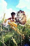 Vixen Return Of The Lion