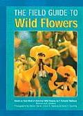 Field Guide To Wildflowers