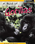 Animal Groups A Band Of Gorillas
