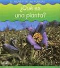 Que Es Una Planta