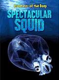 Spectacular Squid