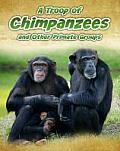 A Troop of Chimpanzees