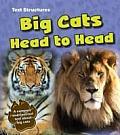 Big Cats Head to Head