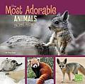 Most Adorable Animals in the World