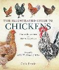 Illustrated Guide To Chickens: How To Choose Them - How To Keep Them