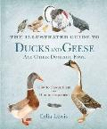 Illustrated Guide To Ducks and Geese and Other Domestic Fowl