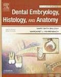Dental Embryology, Histology, And Anatomy