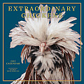 Extraordinary Chickens Calendar [With Poster] Cover