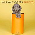 William Wegman Puppies