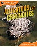 Animal Lives: Alligators and Crocodiles