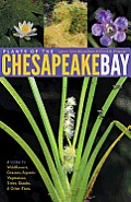 Plants of the Chesapeake Bay: A Guide to Wildflowers, Grasses, Aquatic Vegetation, Trees, Shrubs, and Other Flora Cover