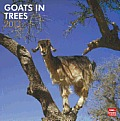 Goats in Trees 2013 Square 12x12 Wall Calendar Cover