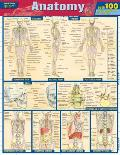 Anatomy Quizzer