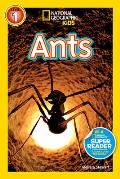 Ants National Geographic Level 1