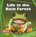 Life in the Rain Forest (Big Picture: Homes) Cover