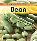Broad Bean (Life Cycle of A...)